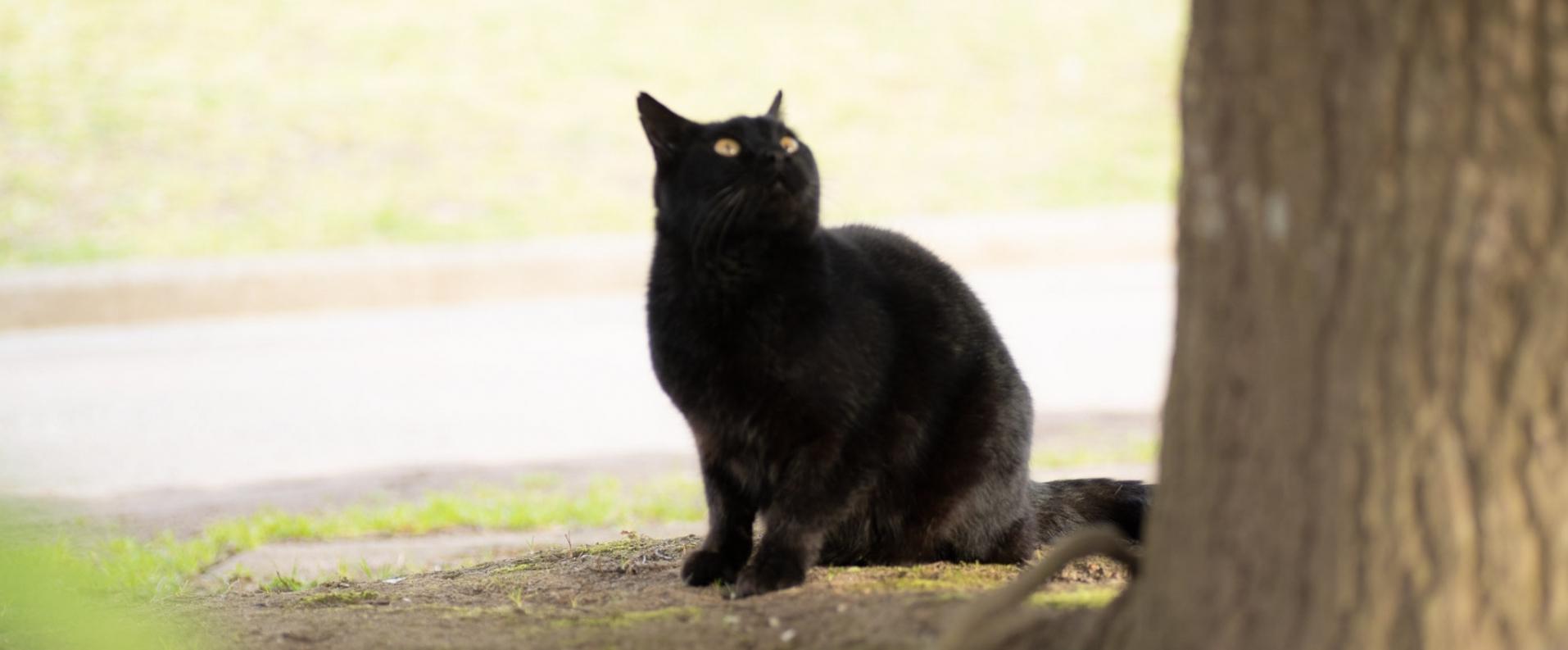 猫のメインビジュアル画像